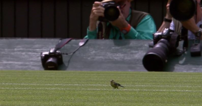 Video: A Bird's-Eye View of Djokovic's Wimbledon Opener