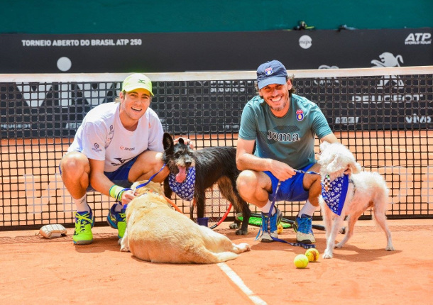 Watch: Ball Dogs Bounding in Brazil